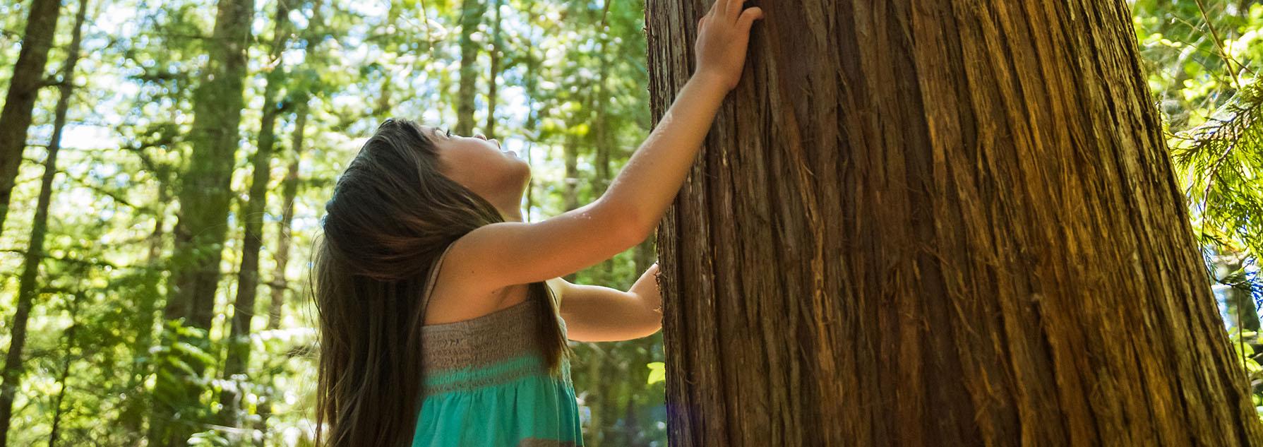 Une jeune fille tient un arbre dans ses bras, dans la forêt, et regarde vers le haut