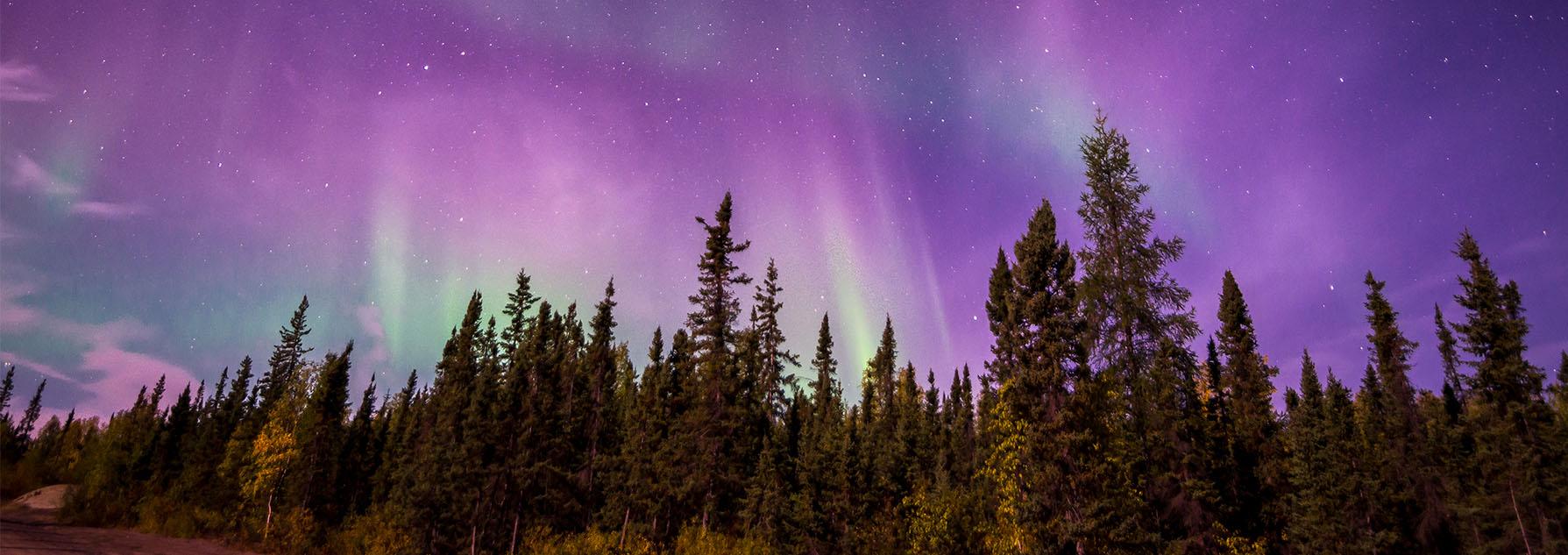 Forêt de sapins et aurore boréale
